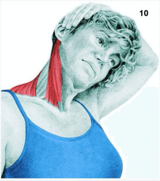 douleurs-cervicales-trapeze-etirements
